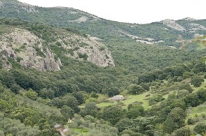 vallée champ