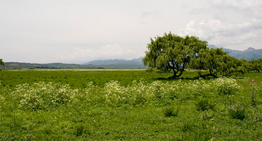 cigueirrigation2