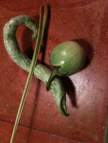 aubergine thai